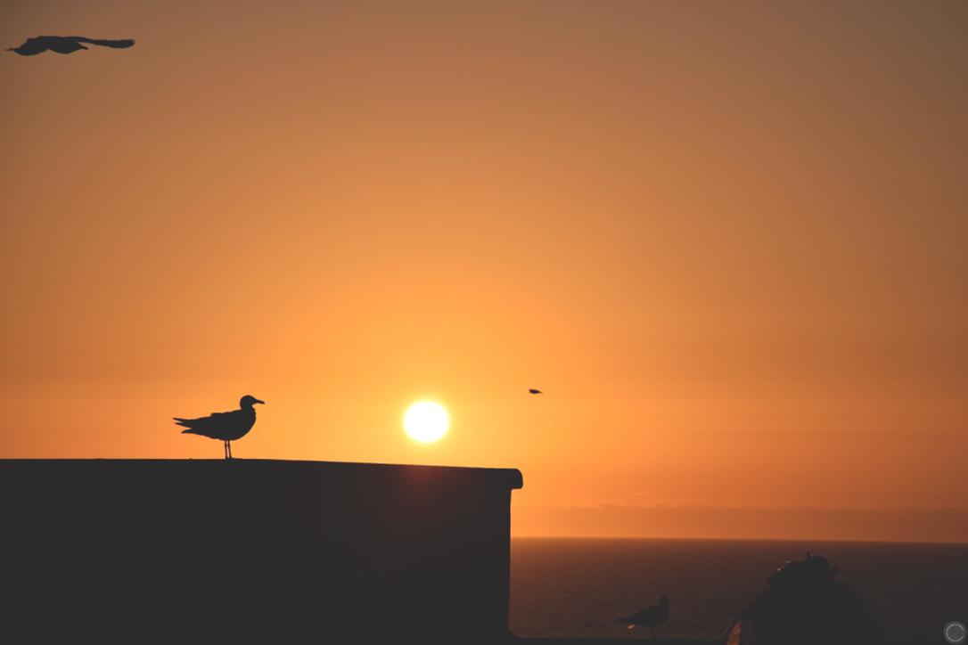 Essaouira 12